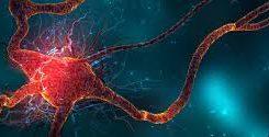 """Mitokondriyal Havva"": Kâinat kitabından Darwin'e bir cevap"